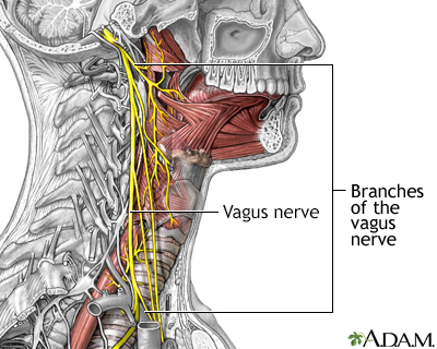 Role of the vegus nerve in epilepsy