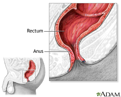 Anus and rectum were normal