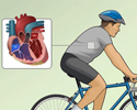 Echocardiography (ECG) - exercise stress test overview